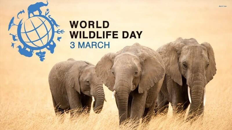 مجمع عمومی سازمان ملل متحد در سال 2013، 3 مارس را به عنوان روز حیات وحش جهانی اعلام کرد.