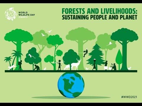 روز جهانی حیات وحش به دنبال ارتقای مدلها و شیوههای مدیریت حیات وحش جنگل و امرار معاش از جنگل است.