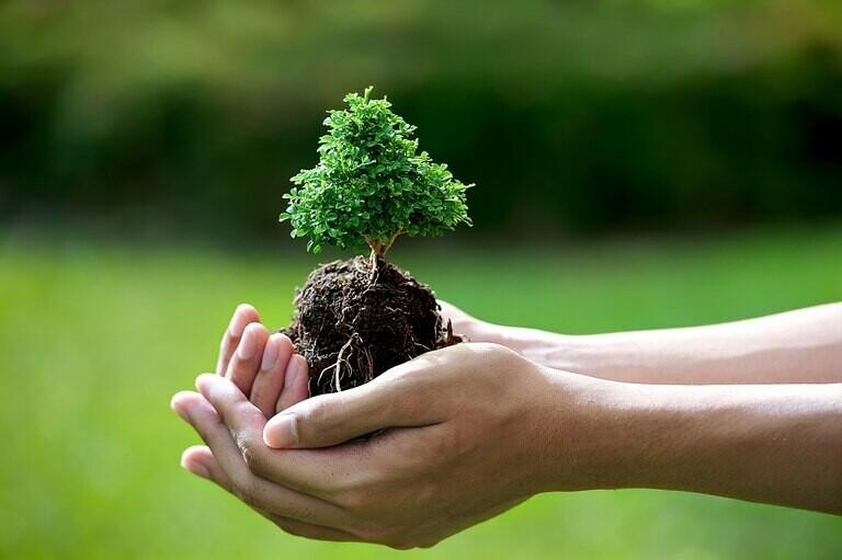 نخستین روز هفته منابع طبیعی، یعنی ۱۵ اسفند «روز درختکاری» است.