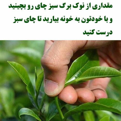 مقداری برگ سبز چای رو می چینید و به خونه میارید تا چای سبز درست کنید