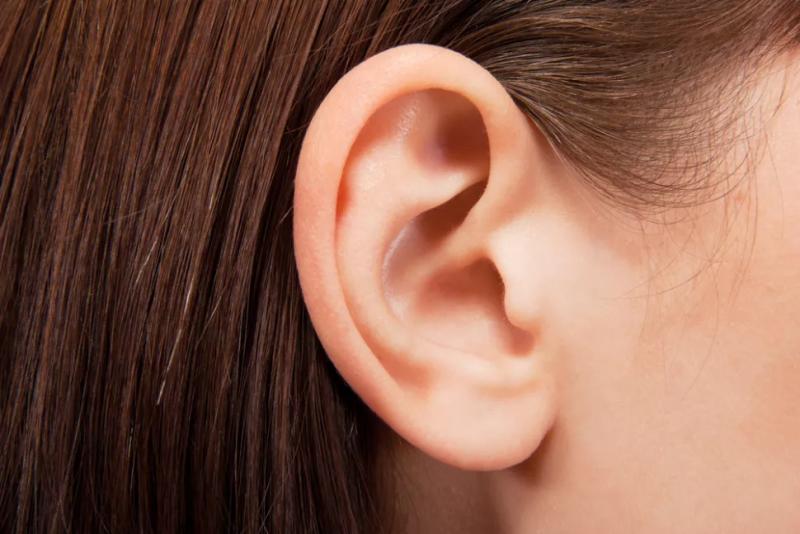 گوش ها نه تنها توانایی شنیدن را دارند ، بلکه امکان حفظ تعادل را نیز فراهم می کنند