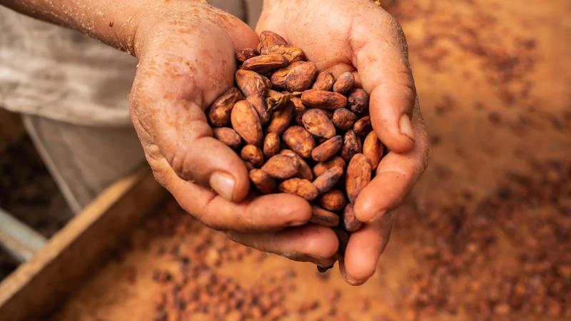 شکلاتی که امروزه از آن لذت می بریم یک غذای بسیار فرآوری شده و تصفیه شده نسبت به غذایی است که قرن ها پیش آزتک ها از آن لذت می بردند